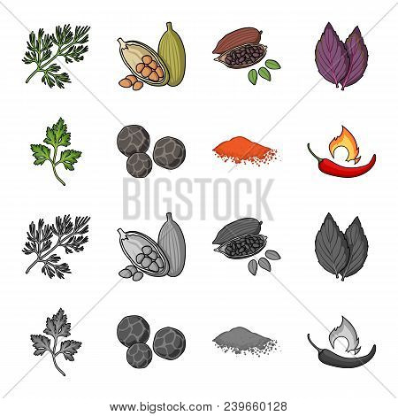 Ptrushka, Black Pepper, Paprika, Chili.herbs And Spices Set Collection Icons In Cartoon, Monochrome