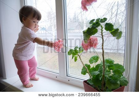 curiosity childness. curious baby girl full body in pink clothes one year old on the window with geranium flower. inquisitive child at home at rainy day poster