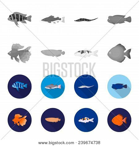 Discus, Gold, Carp, Koi, Scleropages, Fotmosus.fish Set Collection Icons In Monochrome, Flat Style V
