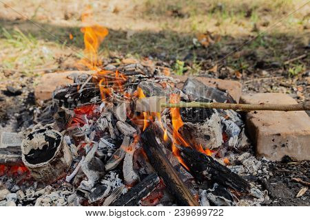 Fry Bacon On A Stake. Bacon Fry On Fire. Fat Fry In The Countryside. Camping In The Forest