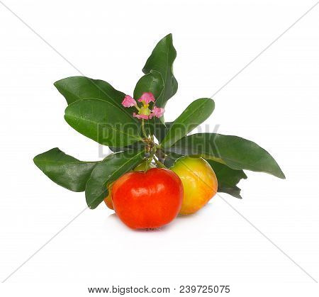 Barbados Cherry, Malpighia Emarginata, Family Malpighiaceae Red, Tropical, Indian, Background, White