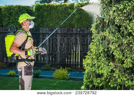 Garden Insecticide By Spraying. Caucasian Worker In His 30s Spraying Garden Trees Using Professional