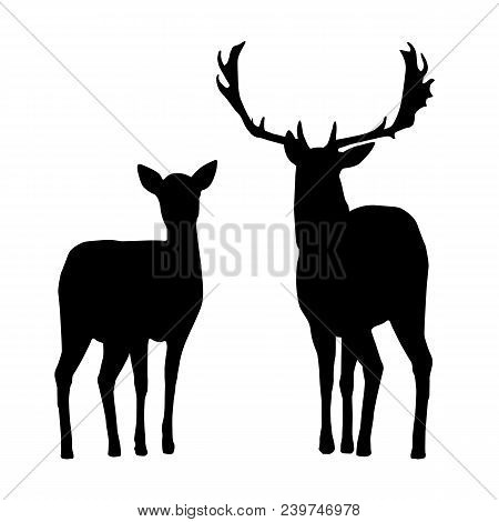 Vector Silhouettes Of Deer And Hind, Isolated On A White Background