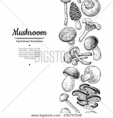 Mushroom Drawing Vector Seamlees Border. Isolated   Food Frame Sketch. Champignon, Morel, Truffle, E