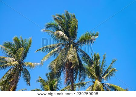 Paradise Landscape With Coco Palm Trees. Exotic Place View With Tropic Tree Silhouettes. Palm Tree J