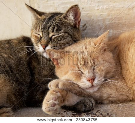 Portrait Of Two Cats, Brown And Yellow, Sleeping Near Each Together On Sunny Day. Valletta, Malta, B