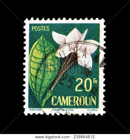 Cameroon - Circa 1959 : Cancelled Postage Stamp Printed By Cameroon, That Shows Randia Malleifera.