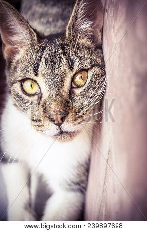 An Intense Catlike Look On A Terrace