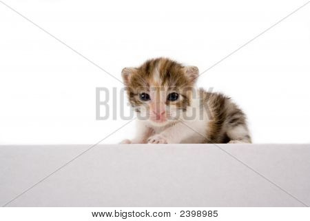 3 weeks striped kitten isolated on white poster