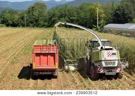 Crushing And Maceration Of Wheat To Make Bio Gas - Brescia Countryside - Lombardy - Italy 156