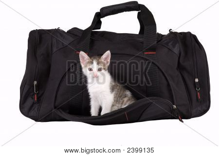 Brown-White Kitten In A Black Bag