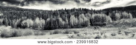 Beautiful Panoramic image of the aspen Trees in Northern New Mexico