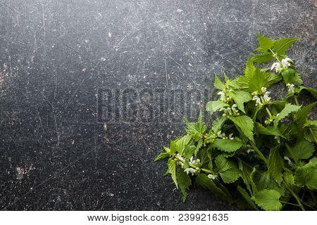 White dead nettle on old table.
