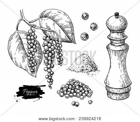 Black Pepper Vector Drawing Set. Peppercorn Heap, Mill, Dryed Seed, Plant, Grounded Powder. Vintage