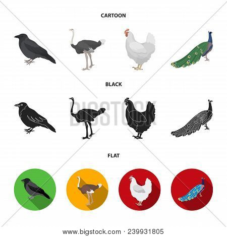 Crow, Ostrich, Chicken, Peacock. Birds Set Collection Icons In Cartoon, Black, Flat Style Vector Sym