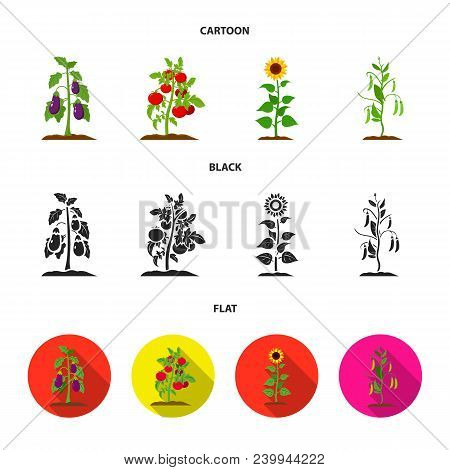 Eggplant, Tomato, Sunflower And Peas.plant Set Collection Icons In Cartoon, Black, Flat Style Vector