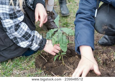Children Plant Trees. Children Planted Oaks. Landscaping. To Plant A Tree. Oak.