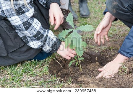 Children Plant Trees. Children Planted Oaks. Landscaping. To Plant A Tree.