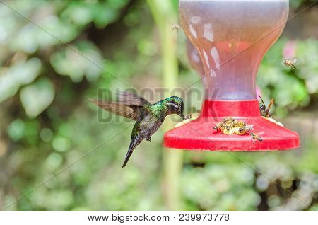 Hummingbird (probably Garden Emerald) Hovering With The Rapid Wing-flapping At The Feeder Surrounded