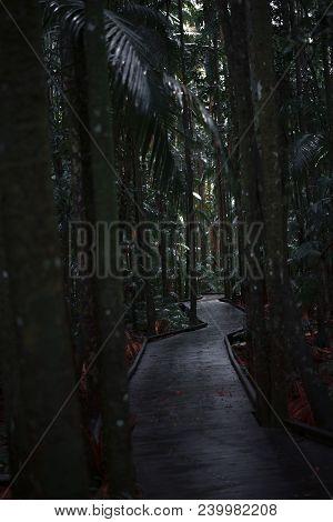 Boardwalk Leading Through The Dark Rainforest.