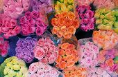 Multi-colored rose bouquets for sale in bundles poster