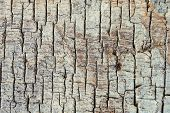 Texture of the old wooden with brown fissured rot poster