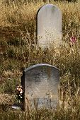Vintage stone headstones surrounded by overgrown grass and fresh flowers taken in a rural cemetery poster