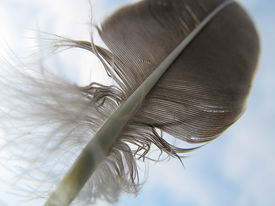 feather in the sky