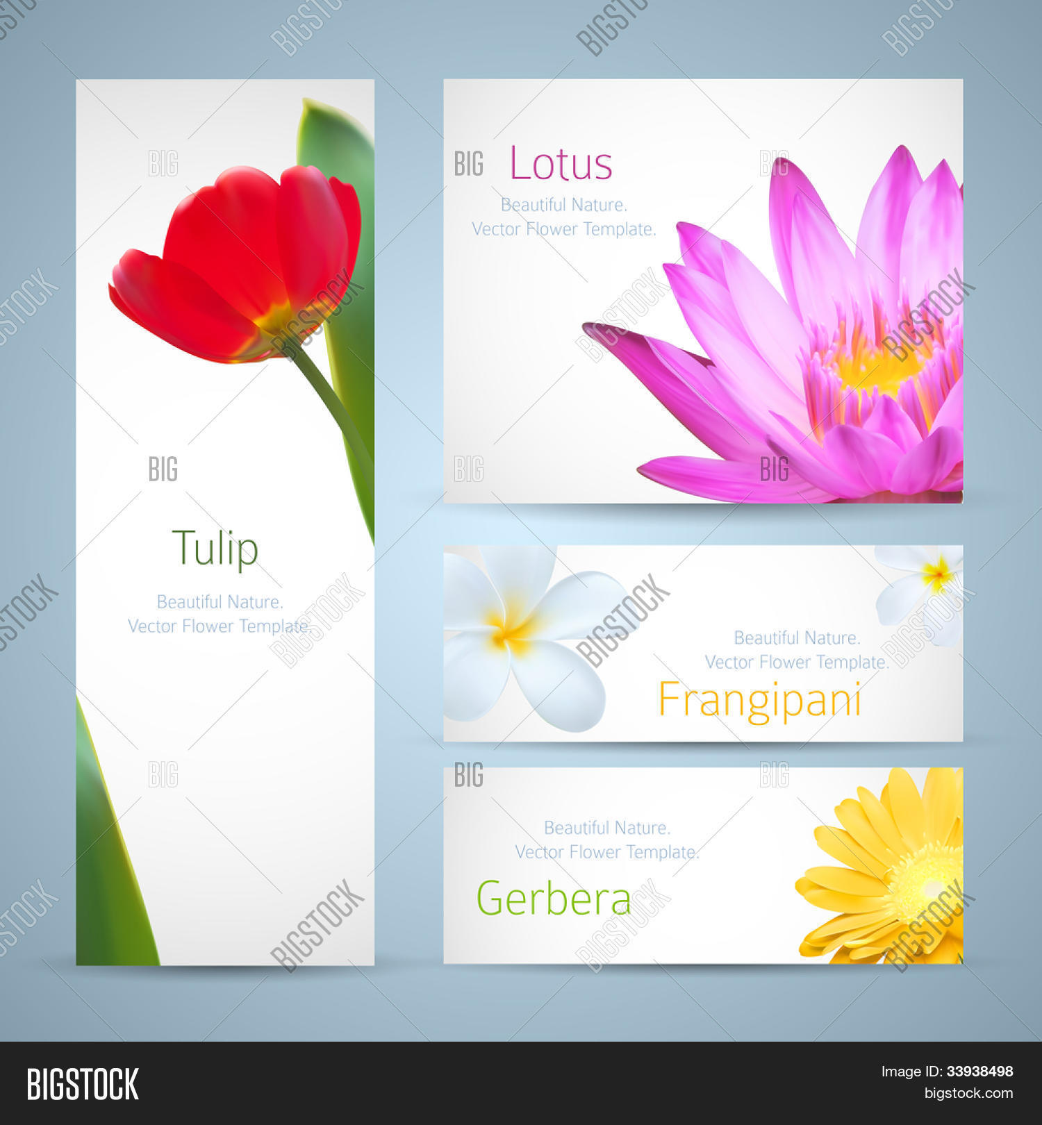 Brochure design water lily flower vector photo bigstock brochure design water lily flower frangipani and tulip vector template exotic tropical flowers izmirmasajfo Images