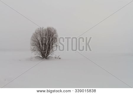 A Willow Is Standing On The Snowy Fields Of The Rural Finland. The Blizzard Is Raging Around The Bus