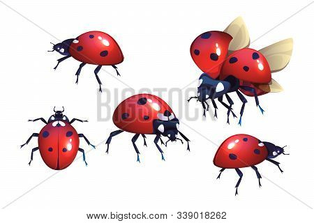 Ladybug Or Ladybird, Red With Black Spots Beetle, Winged Flying Insect Set Of Cartoon Realistic Vect