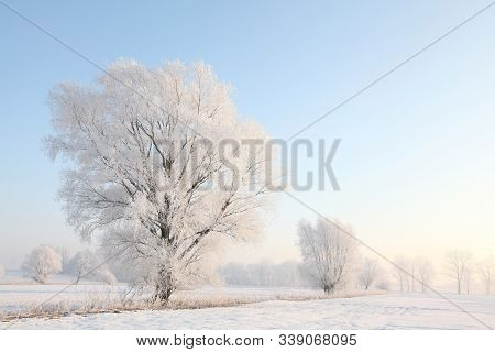 Winter landscape trees field dawn sunrise sunset Nature background Nature background. Nature background Nature background snow morning frost sun Nature background frosty snowy frozen tree Nature background blue sky Nature background Nature background.