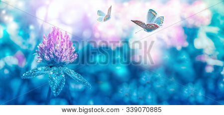 Beautiful Spring Wild Meadow Clover Flowers Bloom, Butterfly In Sun Light With Dew Drops, Macro. Sof