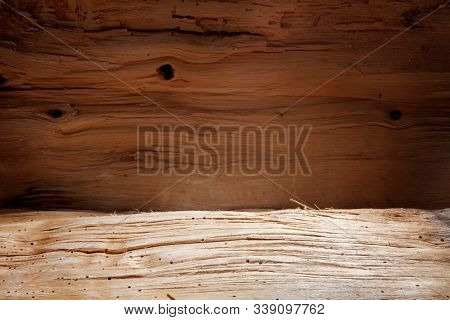 Shelf made of an old tree trunk. Rough wood surface. Place for an exhibition. Natural background. Macro photo.