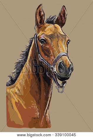 Colorful Bay Foal Portrait With Halter. Horse Head Isolated On Beige Background. Vector Hand Drawing