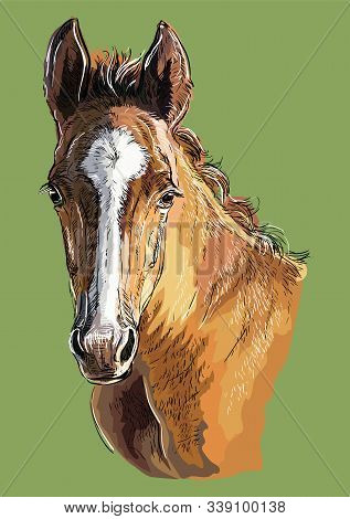 Colorful Cute Pony Foal Portrait. Young Pony Head  Isolated On Green Background. Vector Hand Drawing