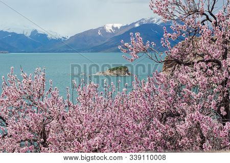 Amazing Spring View From Akdamar Island Surrounded By Blossoming Trees, Lake Van, Turkey. Focus On M