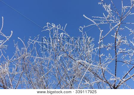Crystalline Frost On Thin Branches Against Blue Sky In Winter