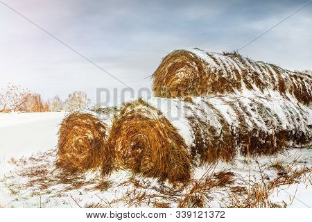 Dry Haystacks For Feeding Animals Are Covered With Snow And Outdoors. Rolled Straw Near The Barn In