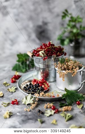 Fresh Currants In A Ceramic Cup: Black Currants, Red Currants And White Currants, Selective Focus. P