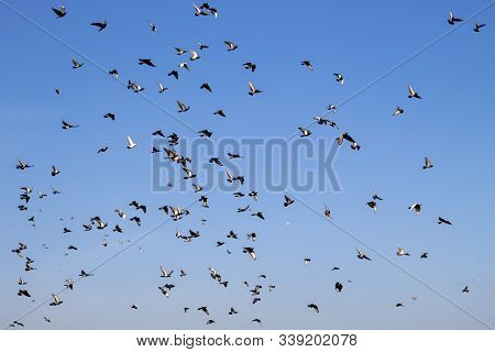 Group Of Flying Pigeon Against Beautiful Sky