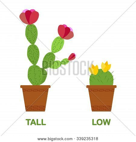 Tall Cactus And Low Cactus. Card For Children - The Study Of Antonyms, A Foreign Language, Nature. T
