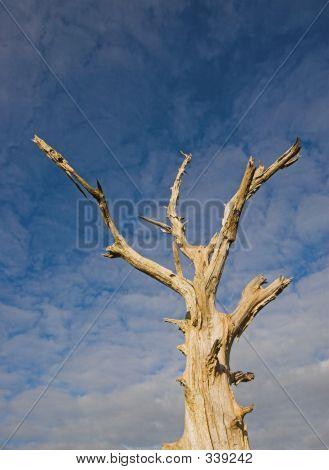 Dead Tree 5513