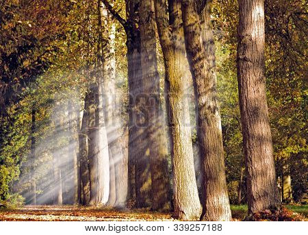 Autumn Landscape. Alley With Trees, Falling Rays Of The Sun And Fallen Leaves.