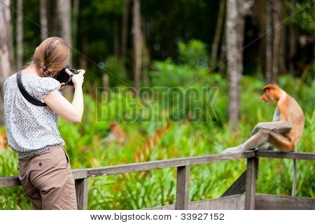 Female photographer and proboscis monkey on Borneo island in Malaysia
