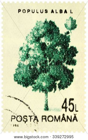Moscow, Russia - December 12, 2019: Stamp Printed In Romania Shows Tree Abele Or Silver Poplar Or Wh