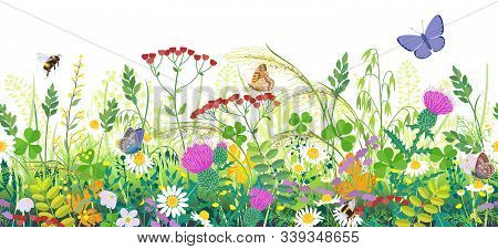 Seamless Horizontal Border With Summer Meadow Plants And Insects. Green Grass, Colorful Wild Flowers