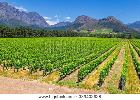 Vineyard And The Mountains In Franschhoek Town In South Africa