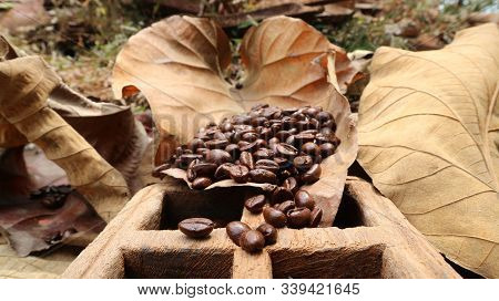 Fresh Coffee Beans On Teak Leaves Are Poured In Teak Wood Boxes