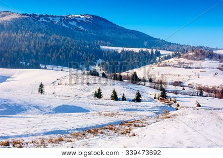 Mountainous Countryside In Wintertime. Snow Covered Rural Fields On Rolling Hills With Spruce Forest